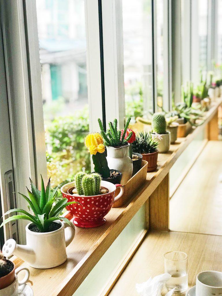 Cute Succulent Pot Sets