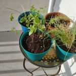 Re-pot herbs for indoor herb garden