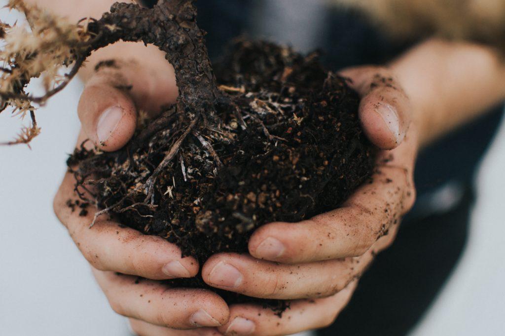 Best Types of Soil for Gardening