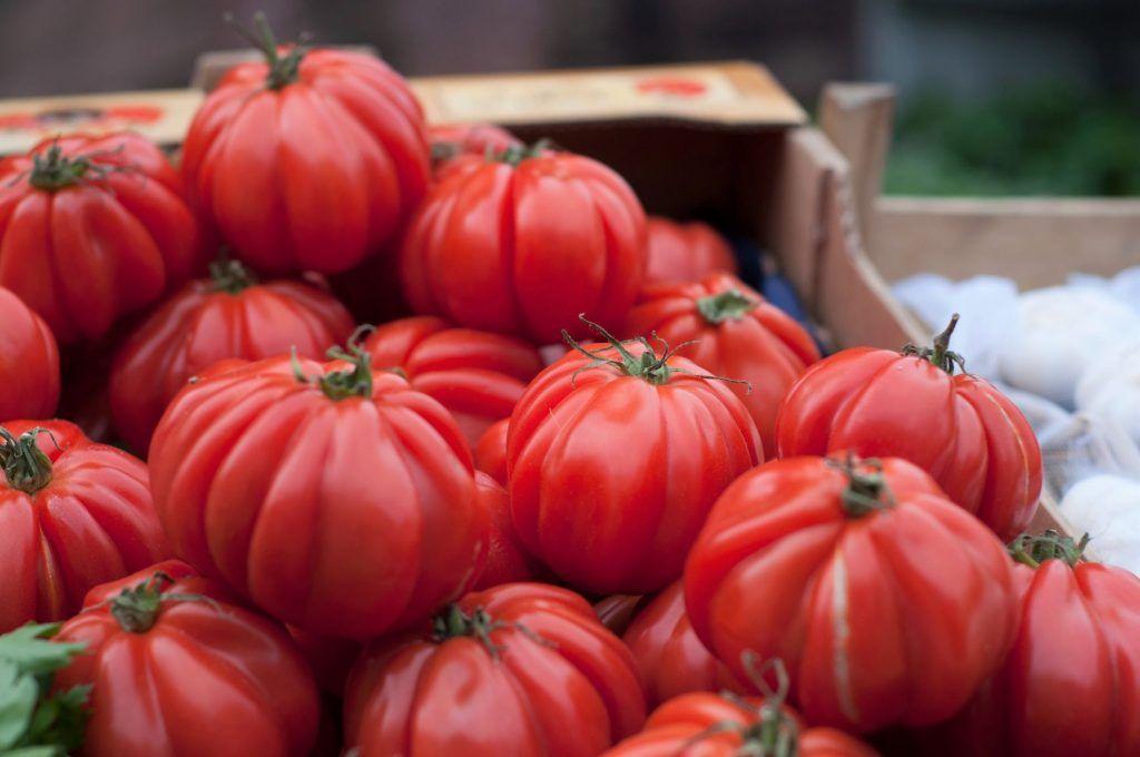 growing big zac tomatoes