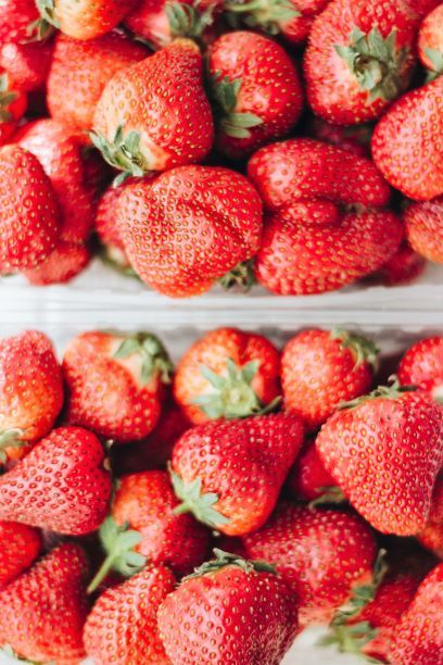 bushel of ripe strawberries being stored in air flow open containers to maintain freshness