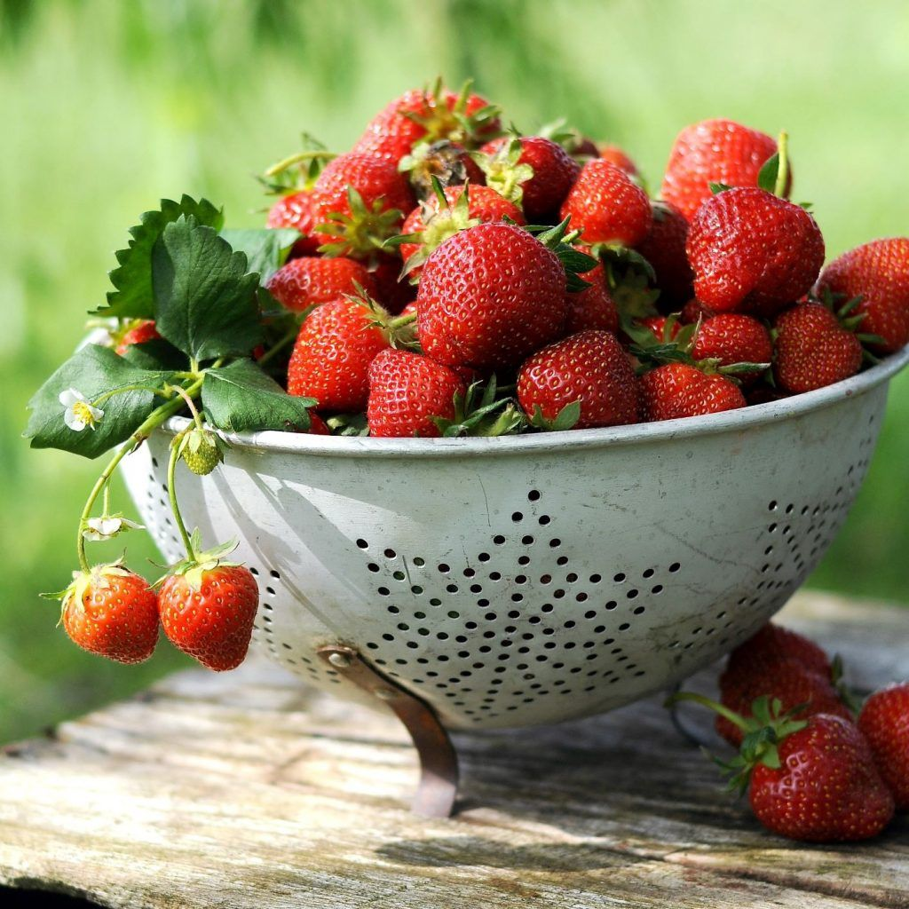 how to harvest strawberries