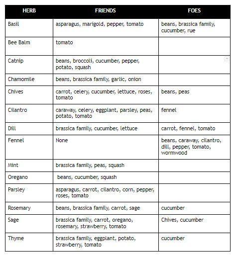 companion herb planting chart