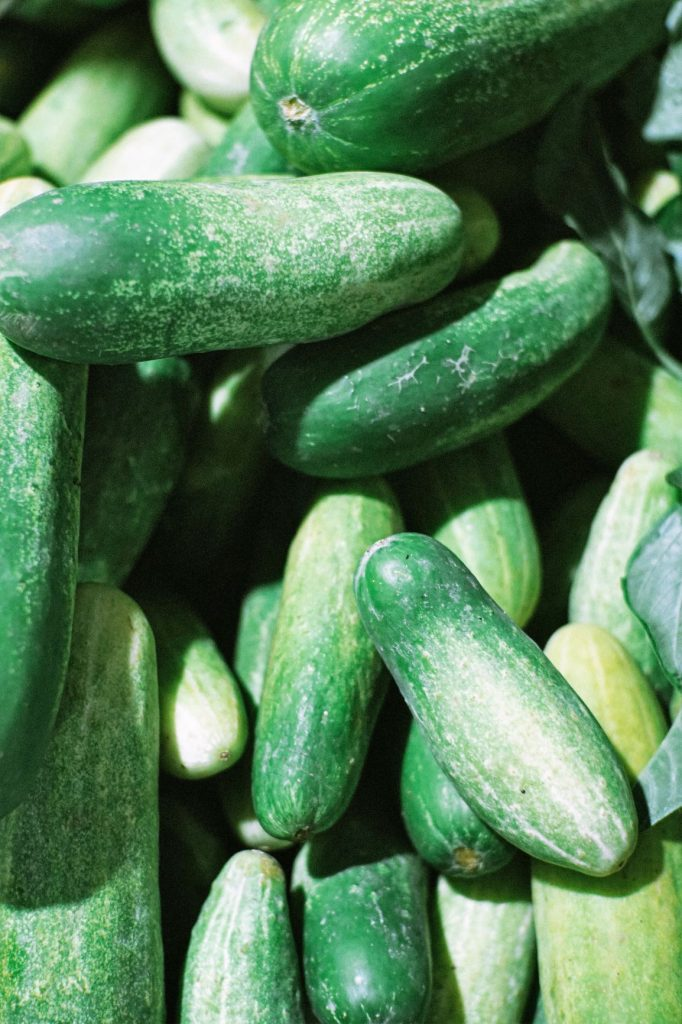 crop of harvested cucumbers in bucket